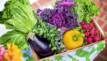 ¿Te gustaría crecer profesionalmente al estudiar el Curso de Nutrición y Herbodietética? Encuentra aquí los 7 principales Centros de Formación